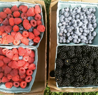 Picked raspberries, blackberries, and blueberries in quart boxes.
