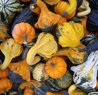 A collection of gourds and mini pumpkins.