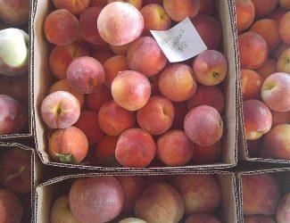Peaches & Nectarines