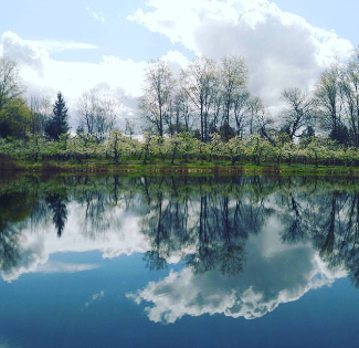 Reflection on an orchard pond.